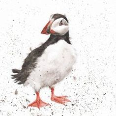 Puffin by Hannah Dale, Wrendale Designs Watercolor Bird, Watercolor Animals, Watercolor Paintings, Watercolours, Bird Drawings, Animal Drawings, Drawing Birds, Different Forms Of Art, Wrendale Designs