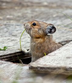 in Canada, squirrels are extra chunkalicious