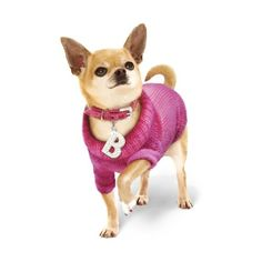 UrbanPup.com lands starring role in West End Show 'Legally Blonde the... ❤ liked on Polyvore featuring dog and legally blonde