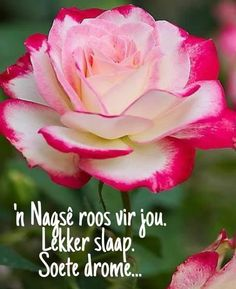 Evening Greetings, Goeie Nag, Afrikaans Quotes, Good Night Quotes, Day Wishes, Daisy, Beautiful Pictures, Rose, Flowers