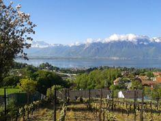 Lac Leman Chatel, Mountains, Nature, France, Lake Geneva, Lake Annecy, Switzerland, Abundance, Naturaleza