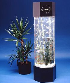 The Long Tower Shaped Fish Tank Is Cool Enough To Adorn Your Interiors With Something That