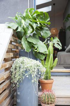 Miks forskjellige grønne vekster og skap din egen oase ute. Planters, Patio, Planter Boxes, Plant, Flower Pots, Pot Holders, Flower Planters, Pots, Container Plants