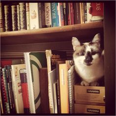 Cat with the books
