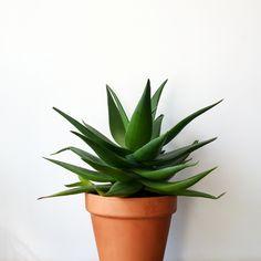 Paris Atelier, Design Floral, Aloe, Planter Pots, Vegetable Recipes, Plants, Aloe Vera