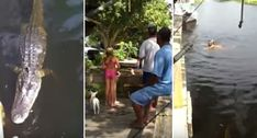 Mulher Com Pouco Amor à Vida Atira-se Para Rio Com Crocodilo