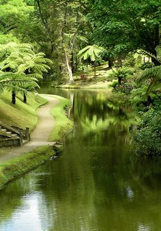 ... no seu jardim botânico. / ... in its botanical garden. #açores #azores #tapportugal - photo: Ana Cristina Garaventa