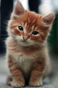 Sweet kitty!                                                                                                                                                      More