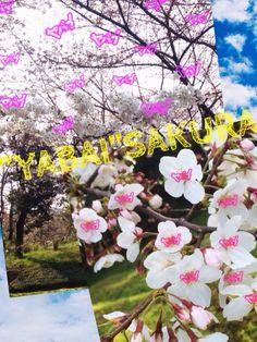 "SAKURA""YABAI"" Painting, Art, Art Background, Painting Art, Paintings, Kunst, Drawings, Art Education"