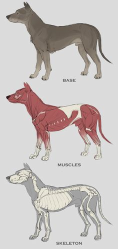 Dog/Dino Hybrid (&Studies) by Sam Santala | Creatures | 2D | CGSociety