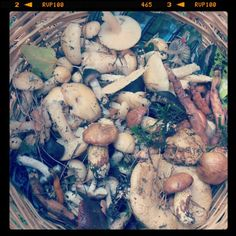 #mushroms season