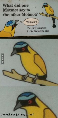 What did one Motmot say to the other Motmot?