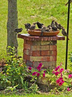 Bricks, large paver, pot saucer = great bird bath. Must do this!!