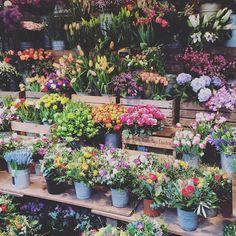 In love with this market! #winterhude #hamburg #saturdaymorning #flowers #blooms #bfftime #homesweethome #goldbekufer #flowerstalking