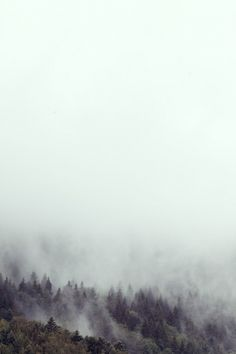 pine-fog