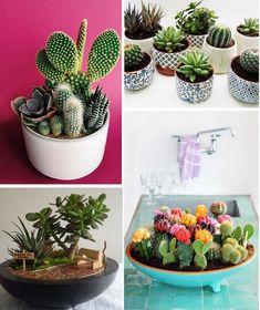 mais. Succulent Gardening, Cacti And Succulents, Planting Succulents, Garden Plants, Cactus Decor, Plant Decor, Diy Bay Window Curtains, Front Yard Garden Design, Succulent Display