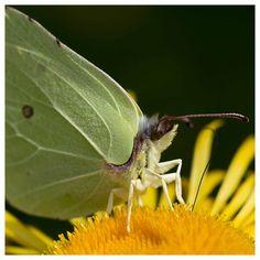 #Butterfly in our garden.