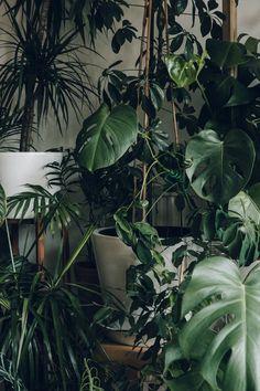 Växter i överflöd. Olika typer av blad, olika typer av grönt, en drömoas #greenplants #växter #djungle