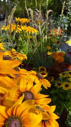 Roger's Gardens (@rogersgardens) • Instagram photos and videos Rogers Gardens, Colorful Garden, Video Tutorials, Garden Styles, Garden Inspiration, Garden Plants, Perennials, Home And Garden, Bloom