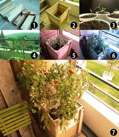 Growing tomatoes with a pallet planter!   #Balcony, #PalletPlanter, #RepurposedPallet