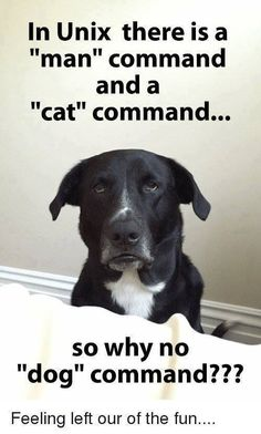 "In Unix there is a ""man"" command and a ""cat"" command. So why no ""dog"" command? Dog Commands, Cool Names, Software Development, Dogs And Puppies, Labrador Retriever, Funny Pictures, Funny Quotes, Memes, Cats"
