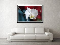 White Orchid 2 Framed Print by Camelia C