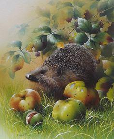 """Bramley Hedge Hog"" by David Finney - Wildlife Artist & Illustrator Hedgehog Art, Woodland Creatures, Cute Creatures, Illustrator, Animal Magic, China Painting, Wildlife Art, Pictures To Paint, Cute Illustration"