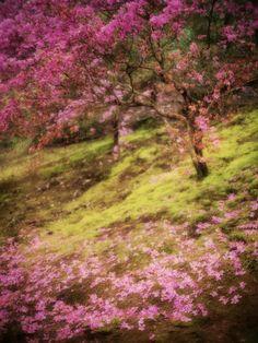 https://flic.kr/p/tGA8hK | 天竜寺/嵐山・京都 | 2015.04.06 Kyoto, Arashiyama /