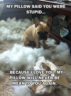 Ha dogs are adorable companions and are very loyal. I would take this dogs personality in less than a heart beat.
