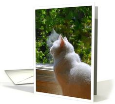 102 best greeting card universe images on pinterest greeting cards cards with cats from greeting card universe m4hsunfo