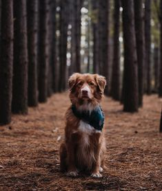 Cute Dogs And Puppies, Baby Puppies, Doggies, Animals And Pets, Cute Animals, Dog Day Afternoon, Nova Scotia Duck Tolling Retriever, Cute Dog Photos, Cool Pets
