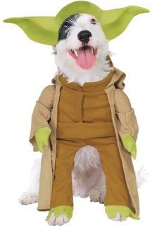 [Halloween Costumes Ideas] Rubies Costume Star Wars Collection Pet Costume, Yoda with Plush Arms, Small * You can find more details by visiting the image link. (This is an affiliate link) Yoda Dog Costume, Costume Star Wars, Pet Halloween Costumes, Pet Costumes, Animal Costumes, Halloween 2016, Halloween Pictures, Halloween City, Dinosaur Costume