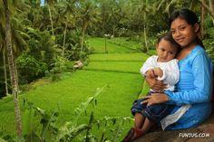 Fertile rice field