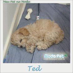 MEU PET NA MODA   A carinha do Ted não nega o quanto está gostoso descansar no Edredom novo. Obrigado por compartilhar esse momento conosco! #meupetnamoda