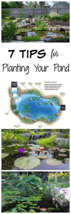 7 Tips for Planting Your Pond - Aquascape, Inc. Tips for Planting Your Backyard Pond Goldfish Pond, Turtle Pond, Diy Pond, Pond Fountains, Natural Pond, Pond Waterfall, Pond Landscaping, Tropical Landscaping, Water Pond