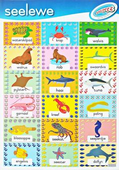 Afrikaanse muurkaarte / plakkate vir die klaskamer of slaapkamer Preschool Worksheets, Preschool Learning, Afrikaans Language, Teaching Time, Work Activities, Toys Online, Educational Toys, Homework, Homeschool
