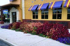 Commercial Landscape Companies West Michigan