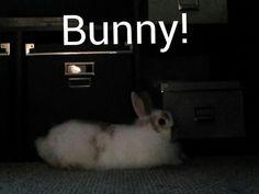 A cute bunny:)