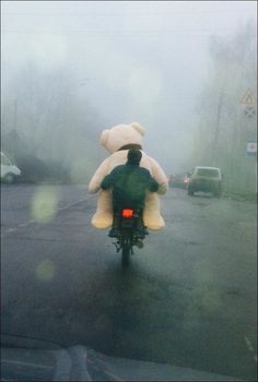 stuffed bear going for a ride