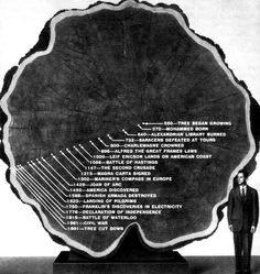 """kadist:  When """"Mark Twain"""" was cut down in 1891, the giant Sequoia was 1,341 years old and measured 331 ft (100.9 m) high and 90 ft (27.4 m) in circumference at the base. Today a stump is all that remains of the once thriving tree that might have survived another thousand years. A cross section is on display at the American Museum of Natural History in New York; the curator at the time marked on its annual rings selected events of human history."""