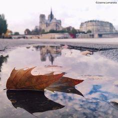 Leaf by Joanna Lemanska on 500px