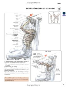 Overhead cable triceps extension. ~ Re-Pinned by Crossed Irons Fitness