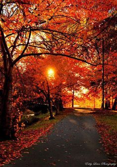 Fall colors - a last hurrah of color before the cold. Seasons Of The Year, Best Seasons, Beautiful World, Beautiful Places, Beautiful Pictures, Beautiful Sunset, Fall Pictures, Fall Photos, Autumn Scenes