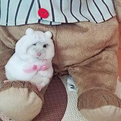My cute baby wearing winter dress mom love you! Cute Small Animals, Cute Funny Animals, Cute Baby Animals, Animals And Pets, Baby Hamster, Hamster Care, Baby Animals Pictures, Cute Animal Pictures, Animal Jokes