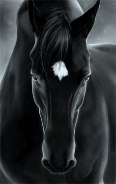 my black horse. Your black horse is breath-takingly beautiful! All The Pretty Horses, Beautiful Horses, Animals Beautiful, Cute Animals, Simply Beautiful, Beautiful Gorgeous, Absolutely Stunning, Beautiful Things, Horse Pictures