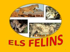 "POWER POINT "" ELS FELINS"""