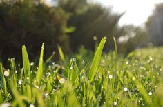 Many Americans strive for the perfect lawn. The first step is to make sure you pick the right type of grass.