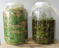 Skorocel kopijovitý (Plantago lanceolata) | www.eniris.eu Flower Beds, My Flower, Flowers, Mason Jars, Nature, Medicine, Self, Naturaleza, Mason Jar