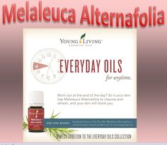 Tea Tree oil, also known as Melaleuca alternifolia, can be found in a wide spectrum of skin care and spa products that can comfort and beautify the appearance of skin.
