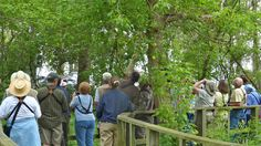 A minor crowd of birders enjoying the bird spectacle at the Biggest Week in American Birding! Leica V-lux 3 #biggestweek https://www.facebook.com/photo.php?fbid=444659748895736=a.444659055562472.117192.355103211184724=3